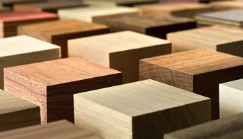 Essenze del legno | T.a.m.i.l.